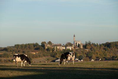 Vaches-et-tour