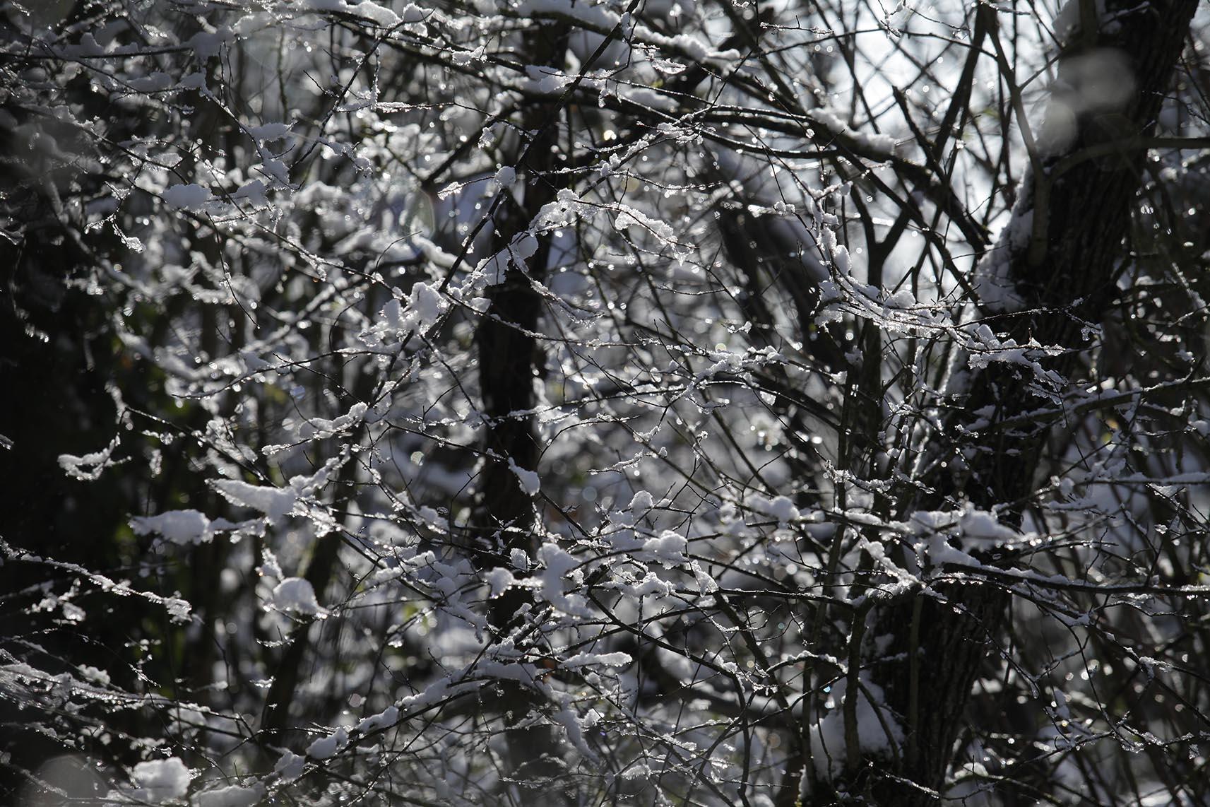 neige arbre