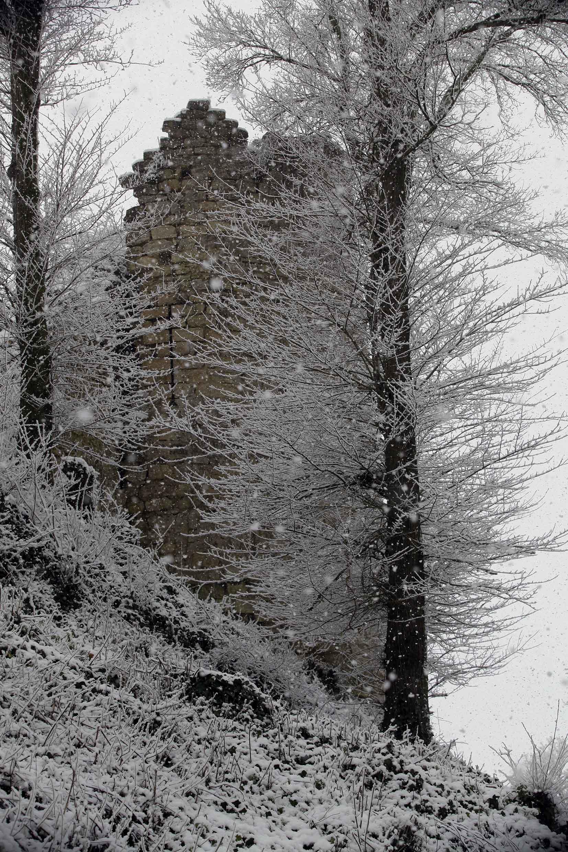 tour arbre